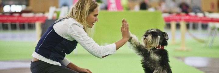 Размещение животных во время проведения World Dog Show 2016